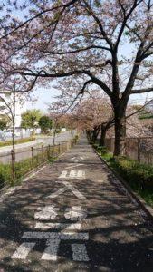 恩田川脇の道路
