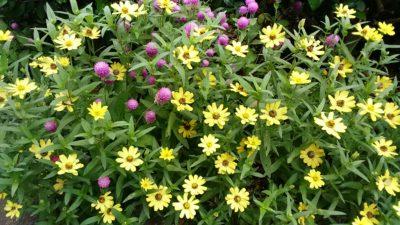 リス園の花