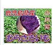 山川紫イモ