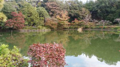 薬師池公園2
