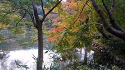 薬師池公園6