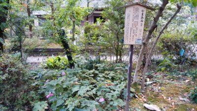 薬師池公園5