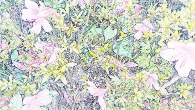 写真を色鉛筆画