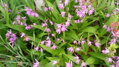 集合住宅地内の花