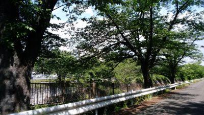恩田川沿いです。