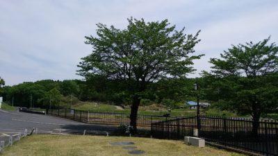 森林公演墓地事務所前から
