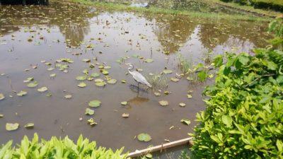 エサを探す鳥