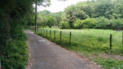野津田公園に行く道路