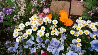 町田の体育館の花