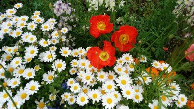 町田体育館の花