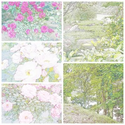 薬師池公園とバラ