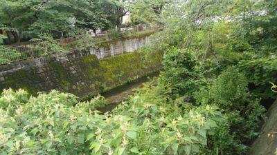 恩田川の自然