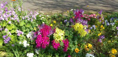 令和2年3月26日の花