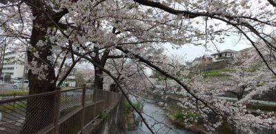 令和2年3月桜4